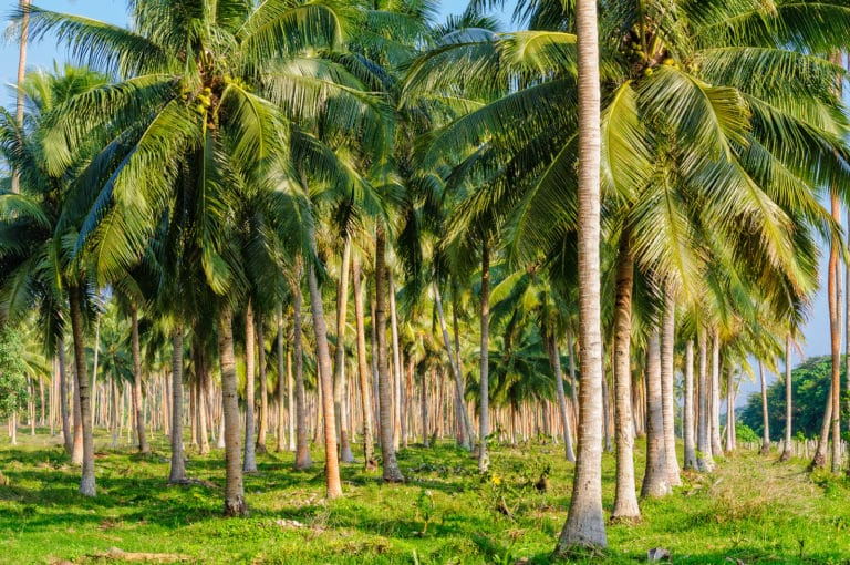 Palm Oil Wastewater