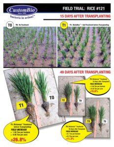 Increase Rice Production